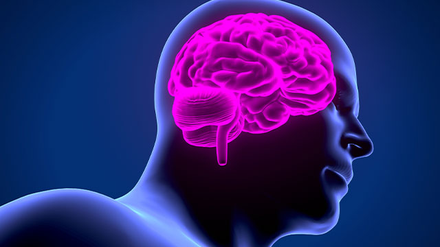 general epilepsy menu